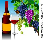 three grape bushes of different ... | Shutterstock .eps vector #588784424