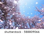 magnificent  scene of cherry... | Shutterstock . vector #588809066