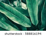 tropical leaves  vintage tone | Shutterstock . vector #588816194