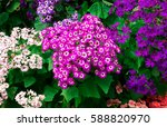 beautiful colorful flowers in... | Shutterstock . vector #588820970