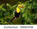 toucan sitting on the branch in ... | Shutterstock . vector #588865988