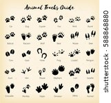 animal tracks   foot print... | Shutterstock . vector #588868880