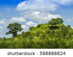 baobab tree in a green savannah ... | Shutterstock . vector #588888824