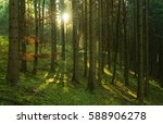 natural forest of spruce trees... | Shutterstock . vector #588906278