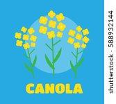 canola flower vector... | Shutterstock .eps vector #588932144