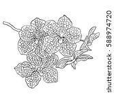 vanda orchid. hand drawn... | Shutterstock .eps vector #588974720
