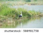 white stork  | Shutterstock . vector #588981758