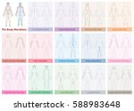 body meridian chart of a womans ... | Shutterstock .eps vector #588983648