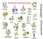 best medicinal herbs for... | Shutterstock .eps vector #588990410