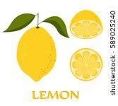 yellow lemon on white... | Shutterstock .eps vector #589025240