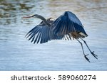 great blue heron in flight | Shutterstock . vector #589060274
