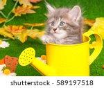 Cute Gray Kitten With Yellow...