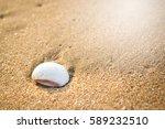 beautiful white shell on beach... | Shutterstock . vector #589232510