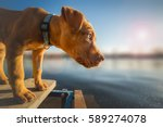 Stock photo cute yellow puppy looking at the distance 589274078