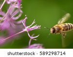 Bee Collecting Nectar On Purpl...