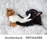 Stock photo cat and dog cute animals are on the bed warm white fluffy blanket 589366088