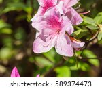 summer flowers series  pink... | Shutterstock . vector #589374473