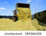 ramming of corn silage in the... | Shutterstock . vector #589386308