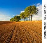 Row Of Poplar Trees Besides...
