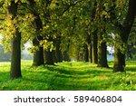 avenue of old oak trees...   Shutterstock . vector #589406804