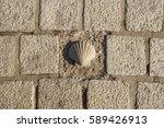 santiago shell  pilgrims shell  ... | Shutterstock . vector #589426913