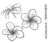 Tropical Flower  Sketch Style...