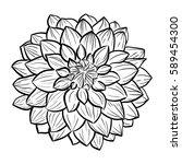 aster flower hand drawn contour ... | Shutterstock .eps vector #589454300