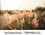 grass texture and background on ... | Shutterstock . vector #589486310