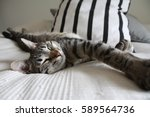 Stock photo cat relaxing 589564736