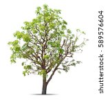 tree isolated on a white... | Shutterstock . vector #589576604