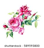 Stock photo watercolor rose bunch of roses on the white background 589593800