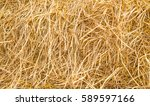 Dried Straw After Harvest  Dry...
