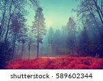 magic dark forest. autumn... | Shutterstock . vector #589602344