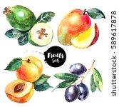 Watercolor Mango  Feijoa ...