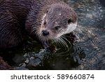 otter   Shutterstock . vector #589660874