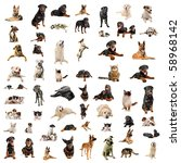 Stock photo purebred dogs puppies and cats on a white background 58968142