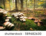 mushroom in the forest | Shutterstock . vector #589682630