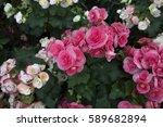 Spring Floral Background Pink...