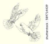 soaring white pigeons. engraved ... | Shutterstock .eps vector #589714439