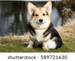 dog in the grass by the river ... | Shutterstock . vector #589721630