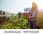 friendly woman harvesting fresh ... | Shutterstock . vector #589743260