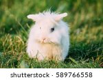 Cute Dwarf Lop Eared Decorativ...