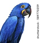 hyacinth parrot portrait drawing   Shutterstock . vector #589770359