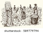 workers picking cotton. hand... | Shutterstock .eps vector #589779794