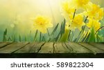 daffodil floral spring... | Shutterstock . vector #589822304