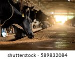 dairy cows in a farm | Shutterstock . vector #589832084