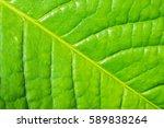 green leaf   leaf texture  leaf