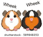 couple of guinea pigs talking... | Shutterstock . vector #589848353