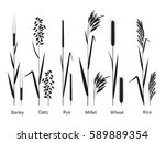 cereals plants set.... | Shutterstock .eps vector #589889354