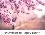 spring blossom orchard.... | Shutterstock . vector #589918544